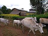 缅甸的秘境,掸族的圣地 - 卡古佛塔塔林(KAKKU PAGODAS)/缅甸(MYANMAR)