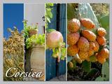 科西嘉岛:造物者的伟大力量与无际的想象力