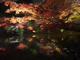 一生必去的京都赏枫之旅 - 景点推荐与行程建议 (日枫 & 夜枫)