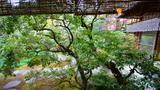 (京都)茶寮宝泉,浅尝一口午后悠闲。