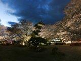 高島城夜櫻
