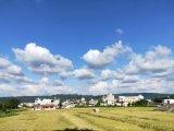 豐收。藍天白雲。