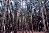 [武陵] 一生必去 夢幻櫻花林&宜蘭超好吃甕仔雞