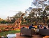 [肯亞] Giraffe Manor長頸鹿莊園。與長頸鹿共度愉快的...