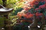 神奈川第一賞楓景點『大山』