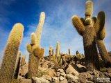 【玻利维亚】天空之镜—曾见过最像天堂的地方。