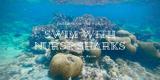 在加勒比海与鲨鱼共游