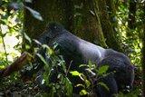 【烏干達、剛果】來一場不一樣的蜜月吧