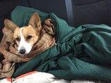 带狗一起去日本旅行!箱根雪地奇遇记