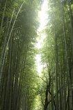 京都岚山赏枫--小火车与寺庙巡礼