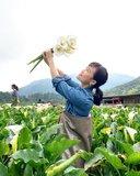 【台北市 / 阳明山】一日农夫体验  就在竹子湖海芋季