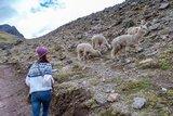 秘魯庫斯科 意料之外美到不行的Ausangate七湖健行