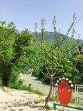 女生獨旅不存在的國家—阿布哈茲|黑海列寧療養地、里察湖邊午餐、 充滿苦難修道院