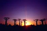 马达加斯加大河人生,摆渡至无与伦比的大景