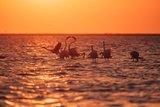 納米比亞海岸 視、味、嗅覺與腎上腺素的衝擊