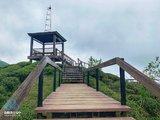 南投鹿谷│秘境大崙山觀景茶園(銀杏森林),360度絕佳觀霧視野